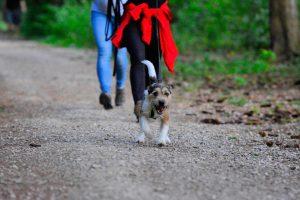 Mantrailing in der Hundeschule München