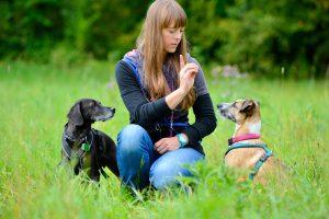Hundeschule HundiTraining