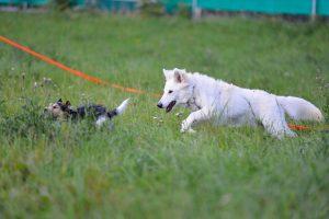 Zwei Hunde in der Welpenschule München