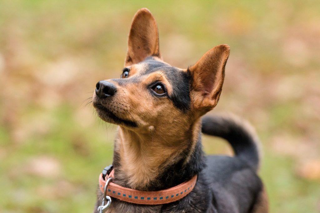 Hundetraining Tipps